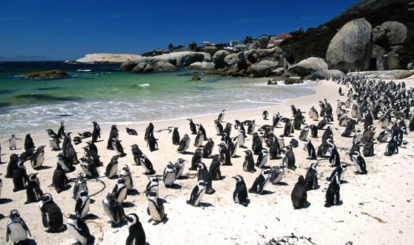 Cape Town's Best Beaches